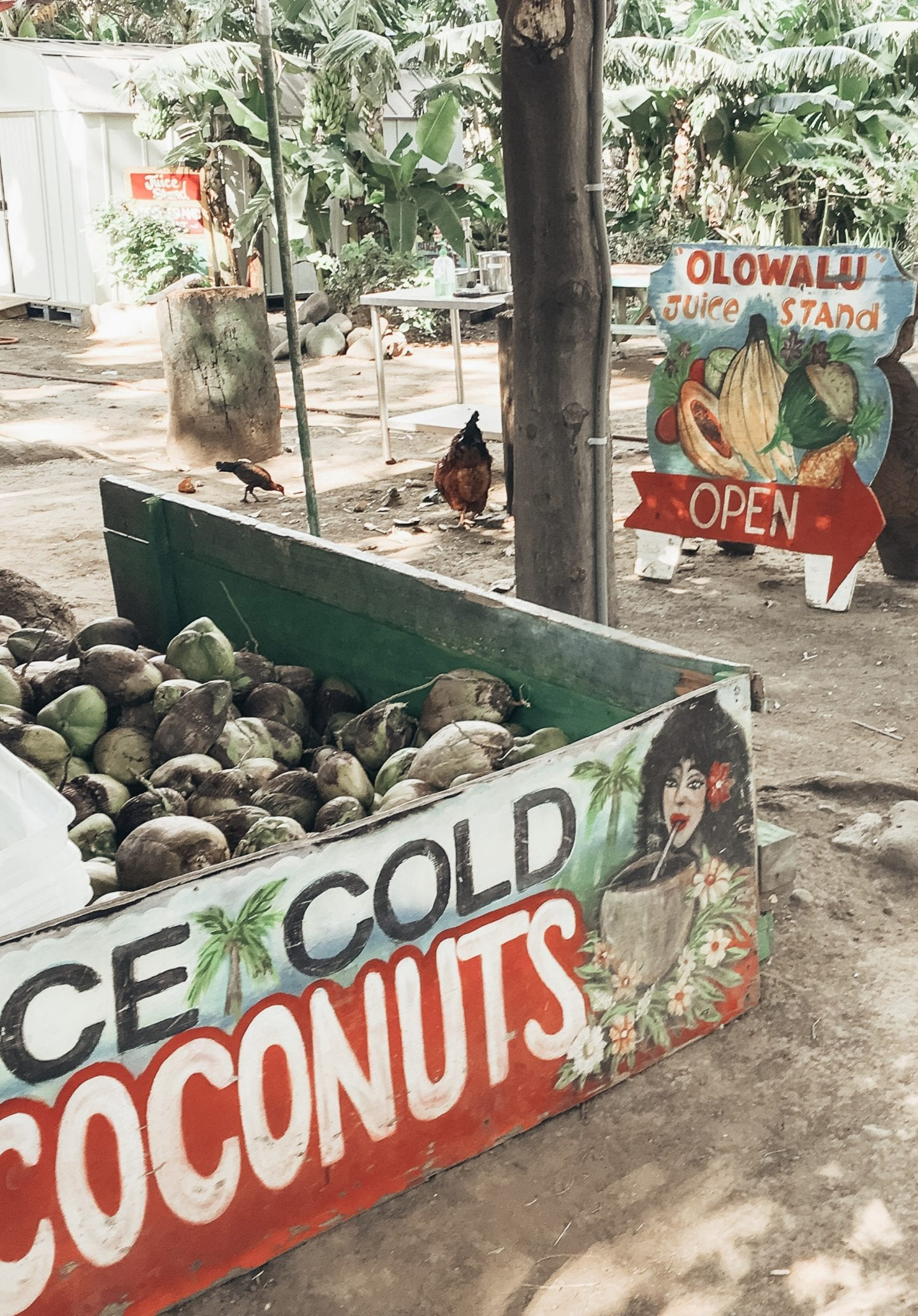 Olowalu Juice Stand I Maui travel guide I Hawaii Travel Guide I via justaddglam.com   Top Things to Do in Maui featured by top San Francisco travel blog, Just Add Glam: get a drink at Olowalu Juice Stand